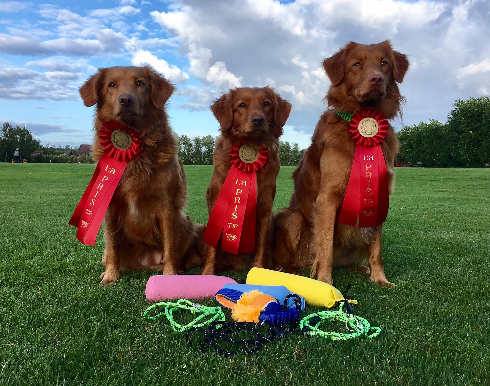 Sunnan, Joenne und Norell jeweils mit einem 1. Preis im Tolling