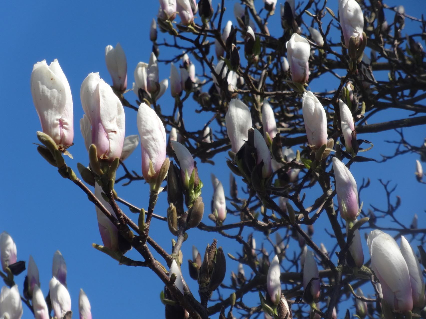 Fleurs de printemps ....