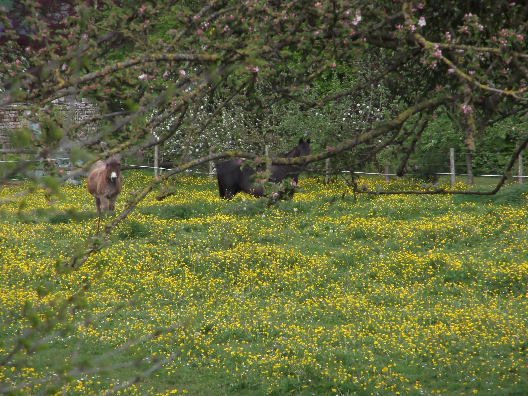 La nature, les chevaux