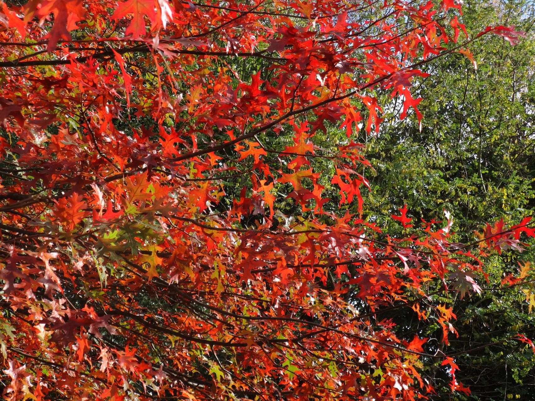 L'automne et ses nuances de couleurs ....