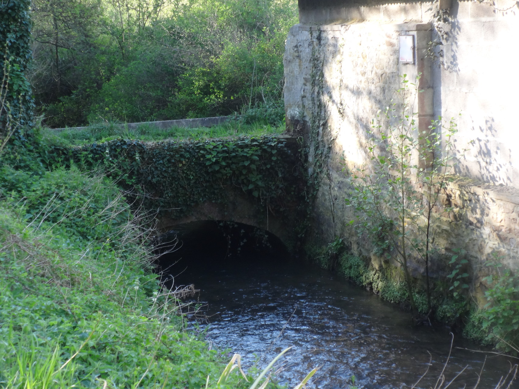chemin Haussé entre Vieux et Feuguerolles - La guigne