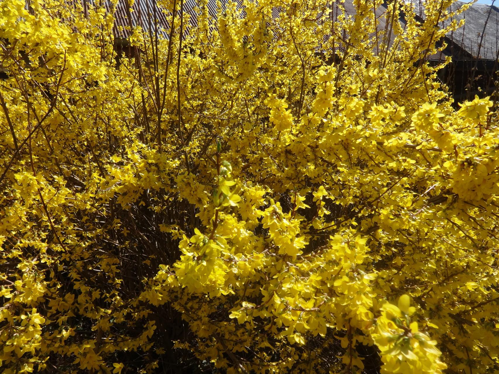 De belles couleurs de printemps