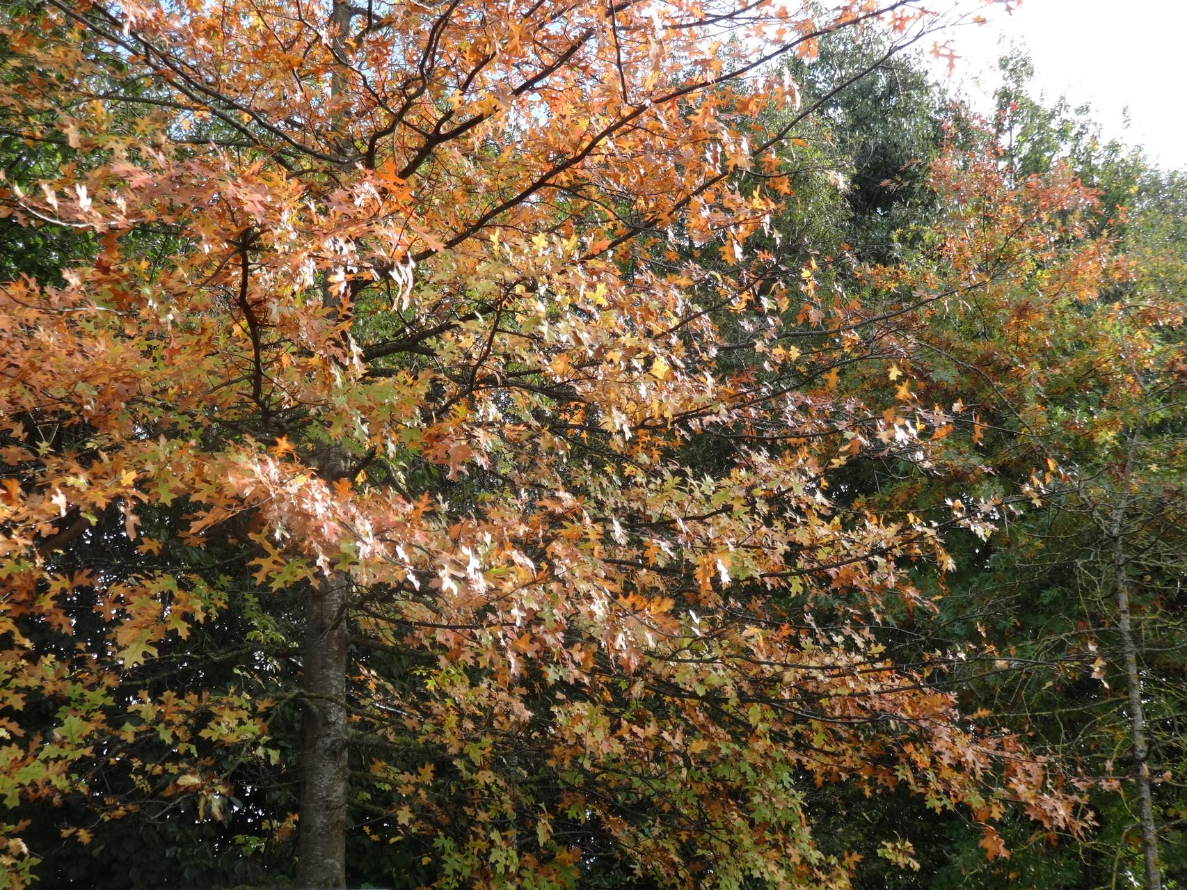 Quelques jolies couleurs d'automne ...