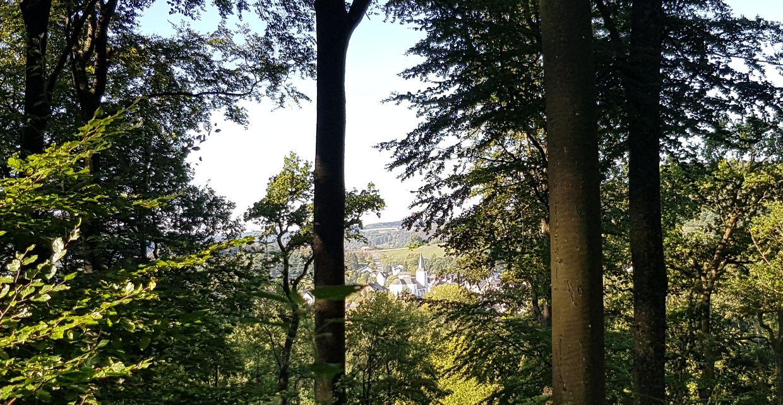 Blick zwischen den Bäumen hindurch auf Gemünden
