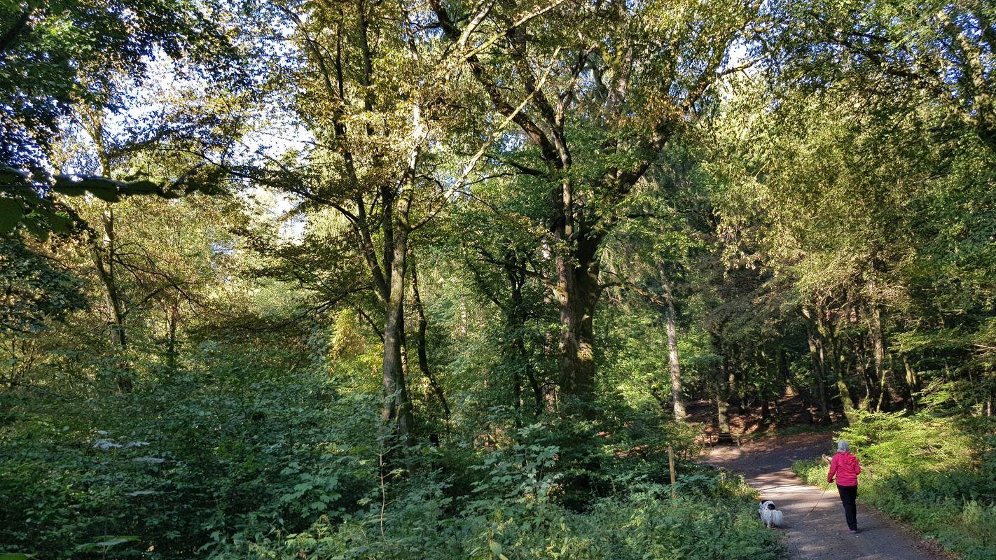 Naturwald Waldmeister-Buchenwald der Gemeinde Irmtraut