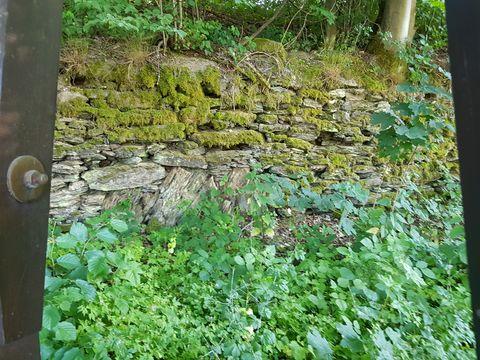 Natursteinmauer - Versetzt uns ins Stauen, wie die Bäume dort Halt finden!