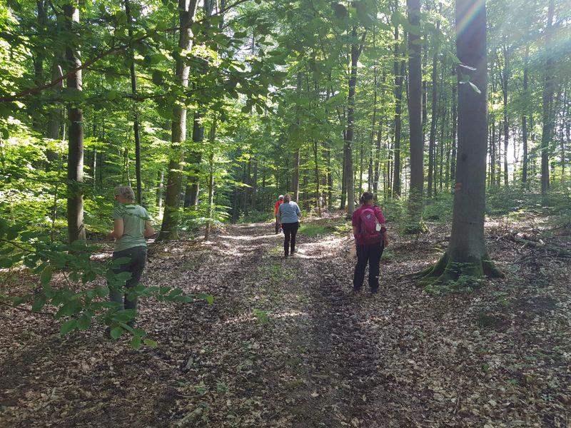 Waldbaden am Naturcamp Alte Wiese Hamm/Sieg