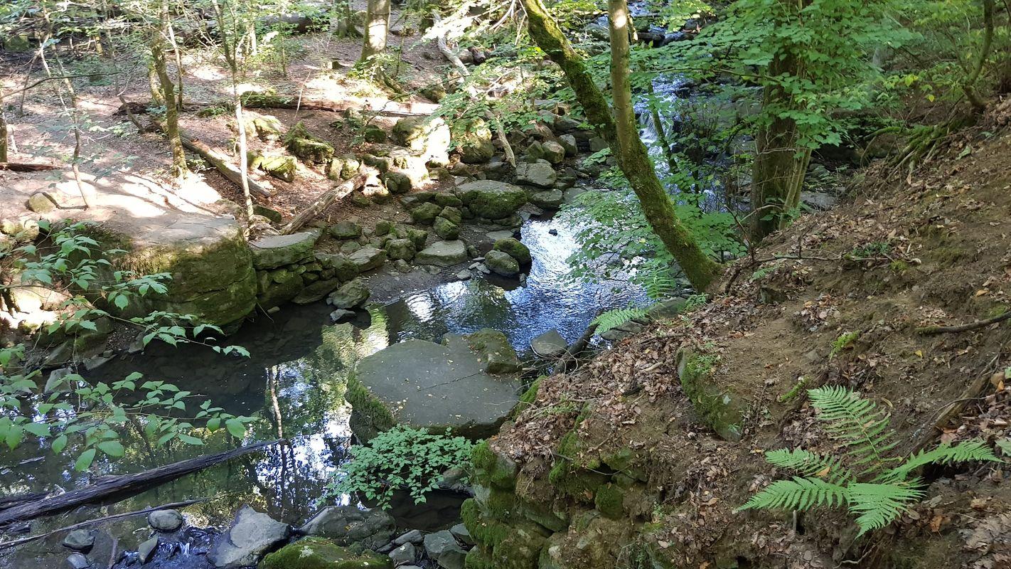In der Großen Holzbachschlut südlich von Rennerod
