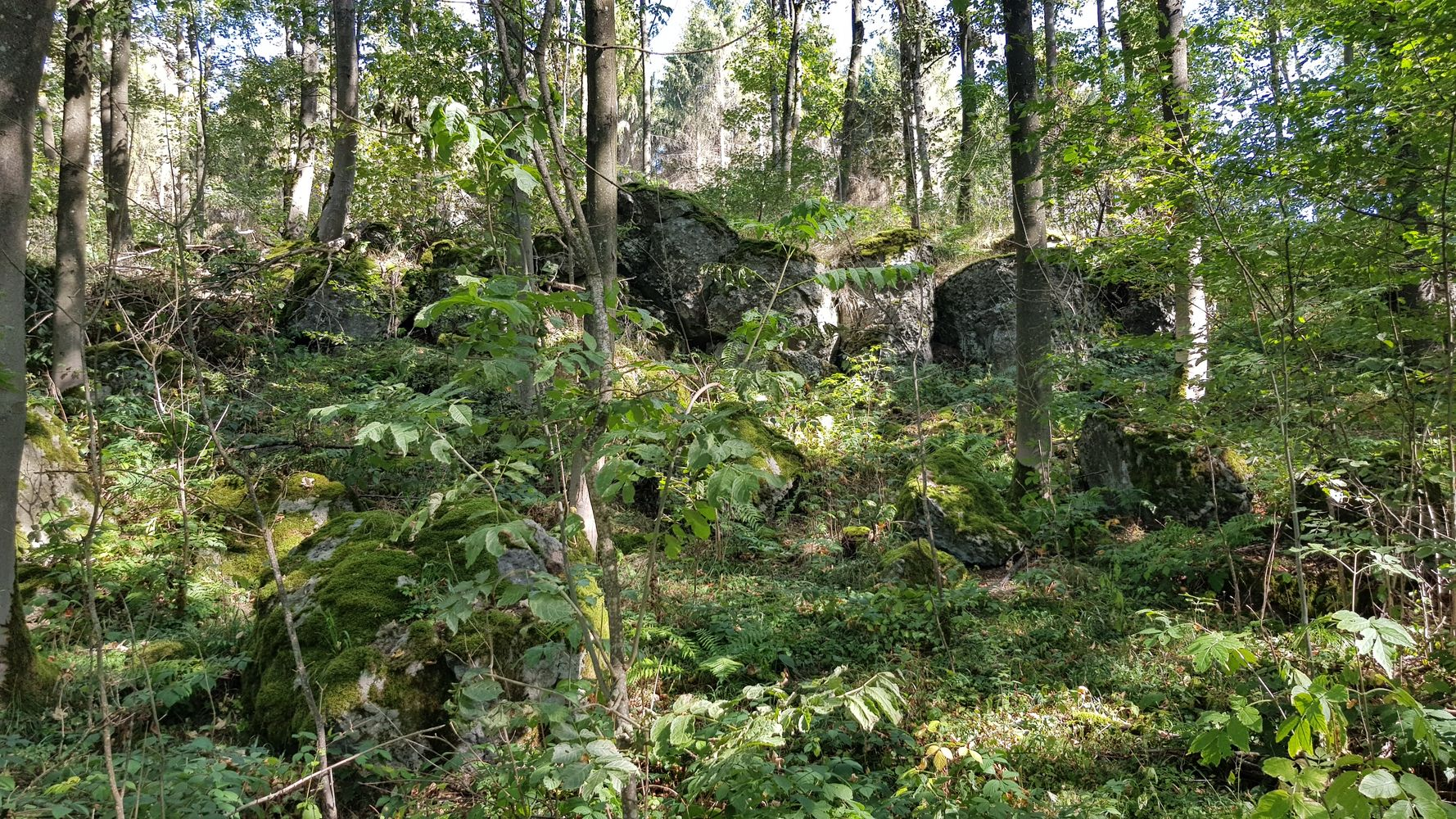 Basaltkuppe am Beilstein in der Nähe von Seck - entstanden vor ca. 28 Millionen Jahren durch Vulkanismus
