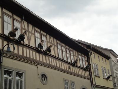 Mühlenhäuserfenstergucker