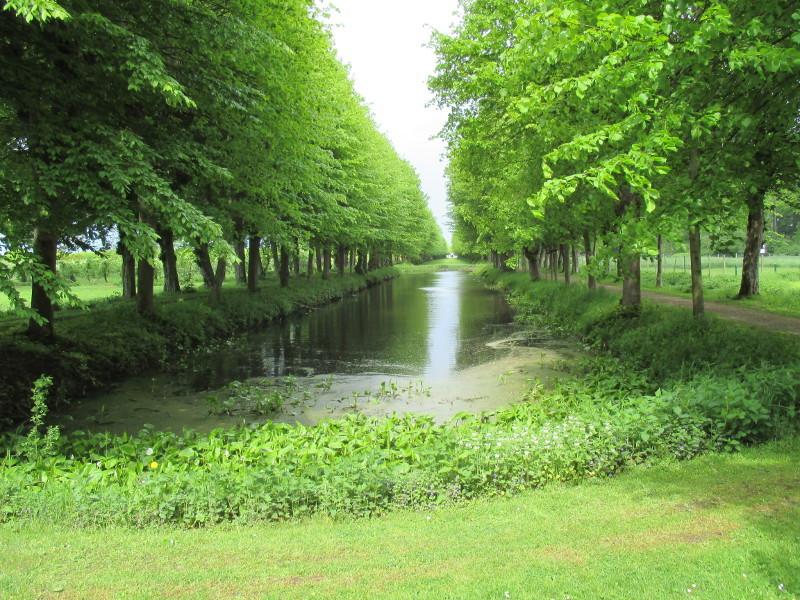 Lindenallee mit 576 Bäumen, 680 Meter lang