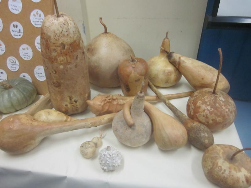 Kalebassen (Flaschenkürbis)