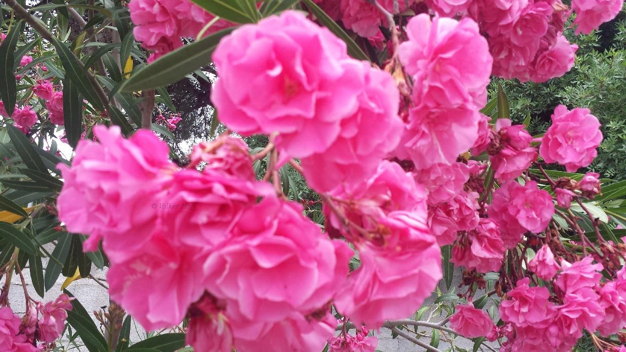 Blumen ohne Ende...