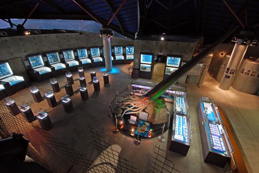 第1貝の館の写真です。約1,500種を常設展示しています。
