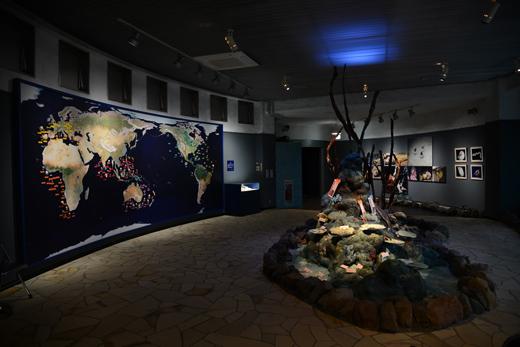 第2貝の館の写真です。海底をイメージした館内となっています。