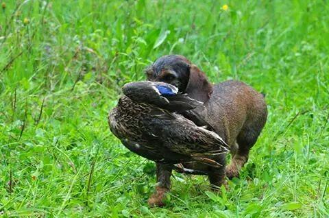 Apport an der Ente