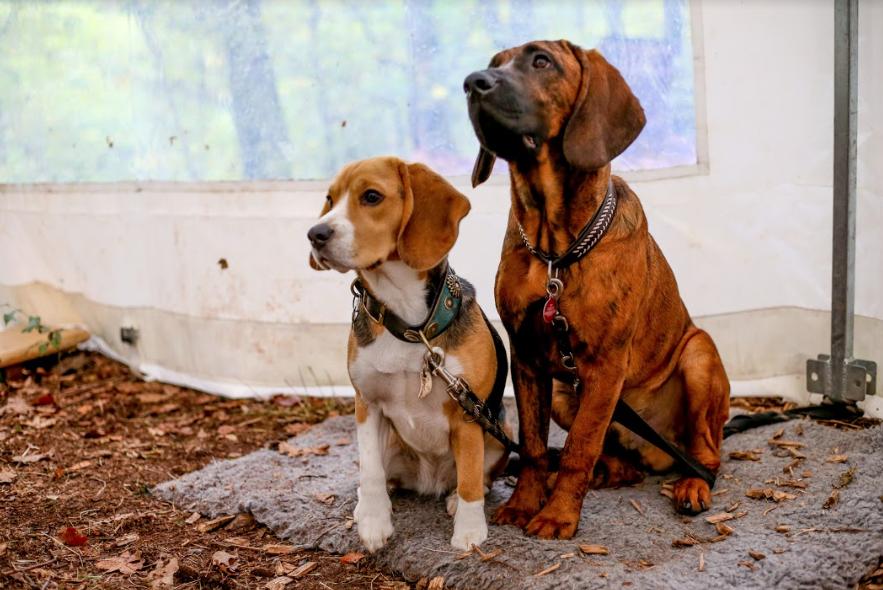 Carole & Robert van Dam's dogs Xilly & Eddy