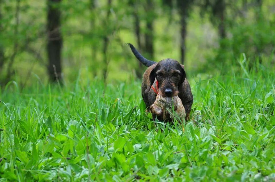 Auch auf der Kaninchenjagd ist Quinn ein guter Begleiter!