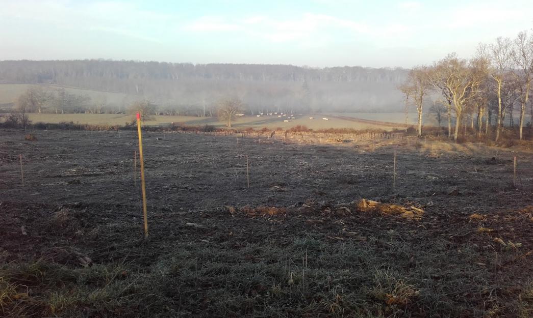 Parcelle de chêne financée par h2impression et h2copy à Chissey lès Mâcon,