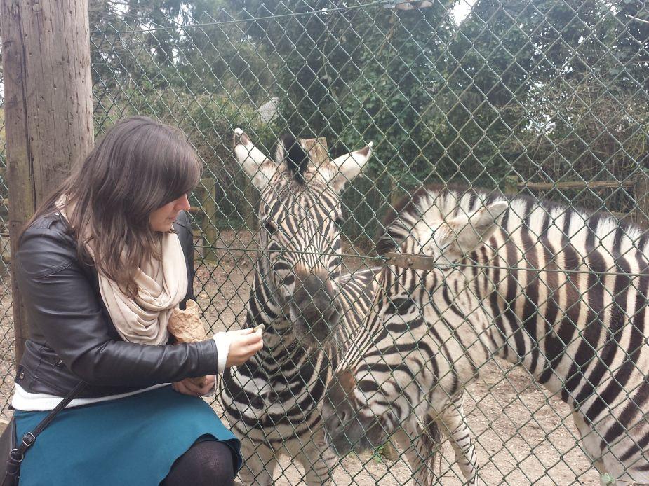 Zoos: Was für und was gegen einen Zoo-Besuch spricht
