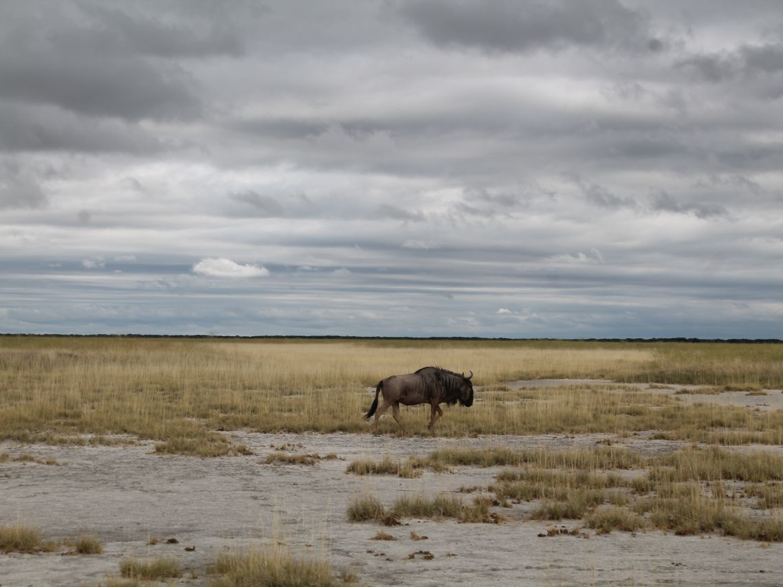 Nata in Botswana: Ausflug in die Makgadikgadi-Salzpfannen