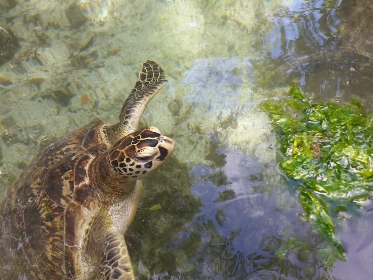 Schwimmen mit Schildkröten in Nungwi auf Sansibar