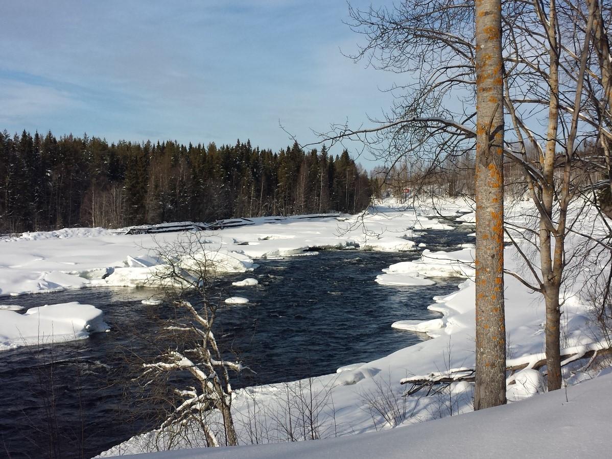 Natur pur in Schweden: Stromschnellen am Mårdseleforsen