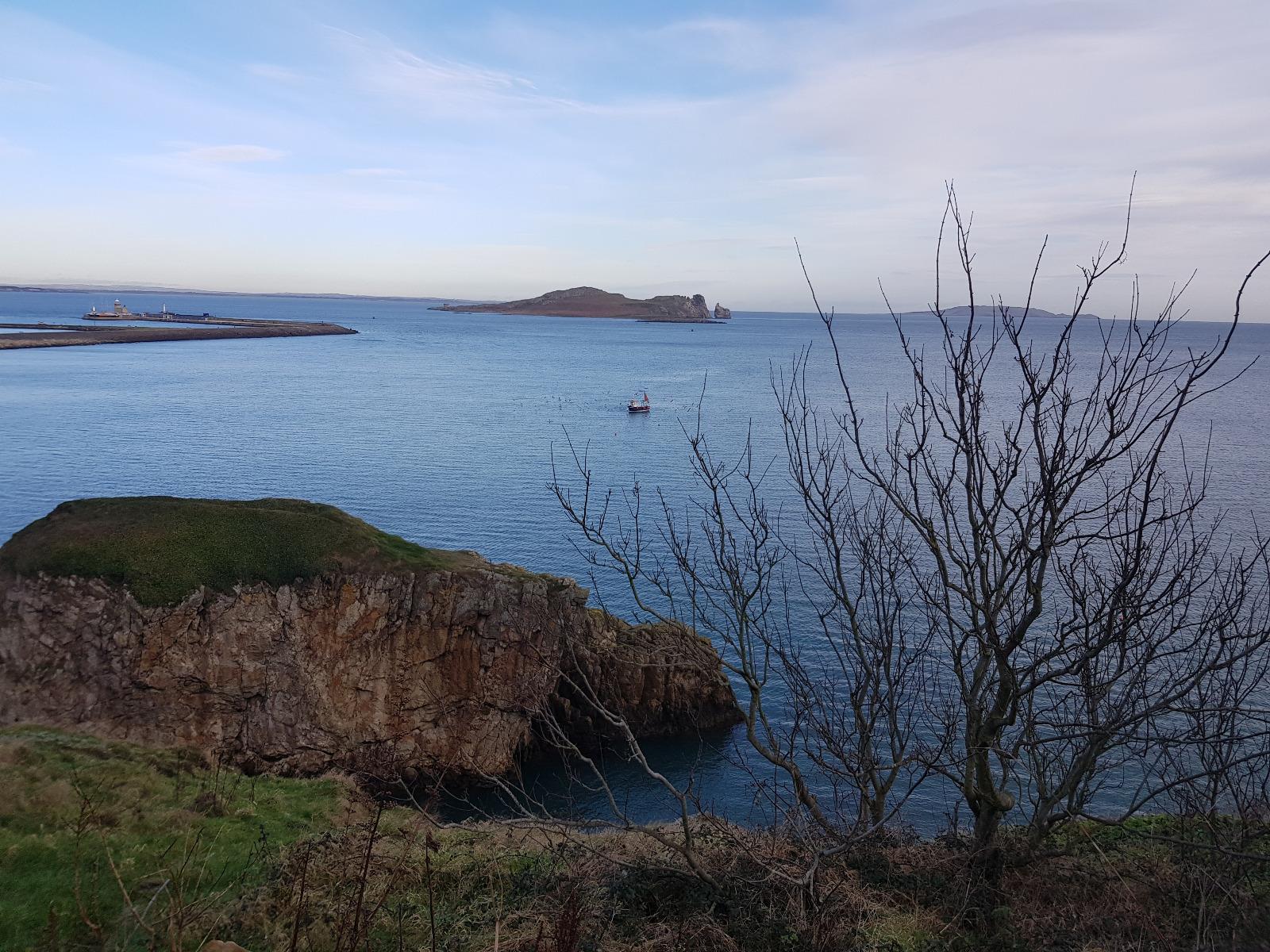 Robbengucken auf dem Cliff Walk in Howth in Irland