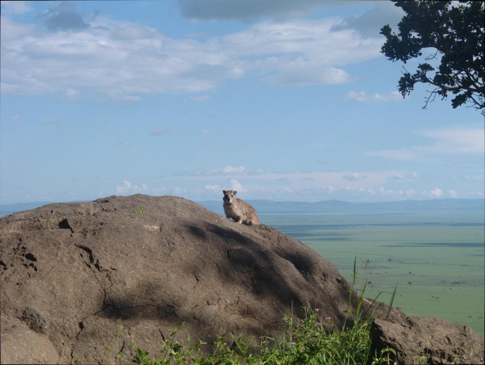 Die 10 schönsten Nationalparks für eine Safari in Afrika