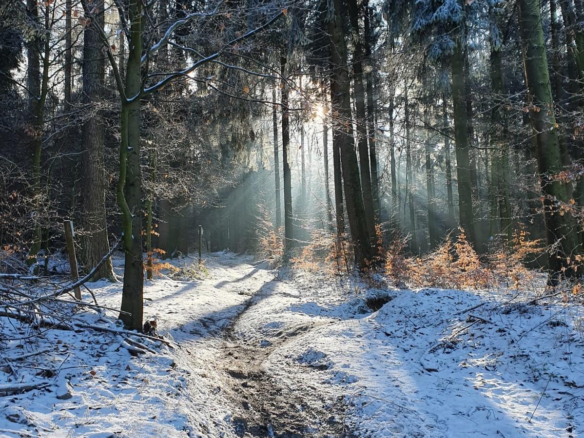 Lockdown-Flucht: Winterwandern im Deister bei Hannover