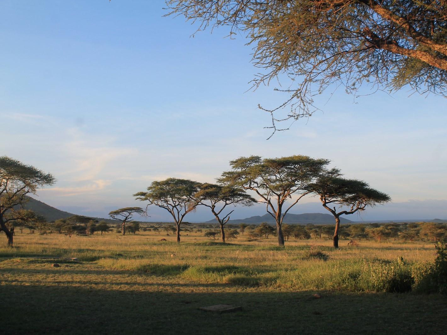 Safari in Tansania: Serengeti darf nicht sterben