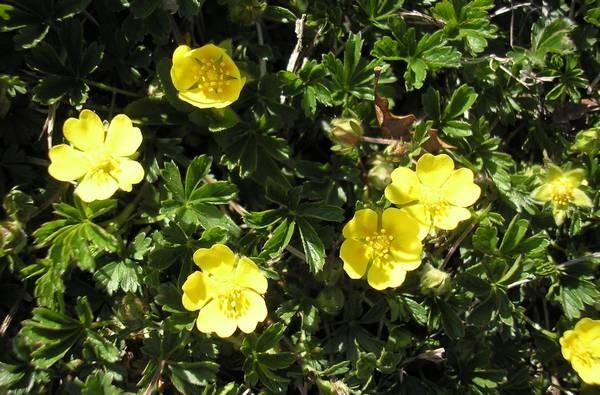 Nature paysages flore autres plantes fleurs petit village du lot - Polygala myrtifolia feuilles jaunes ...
