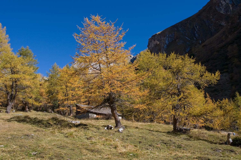 Herbstliche Lerchen im Teischnitz-Tal