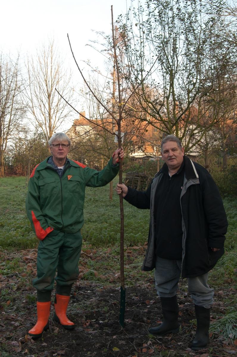 Ein Baum wird gepflanzt auf der Obstwiese (2014) mit Jürgen (links) mit Norbert Kilimann.