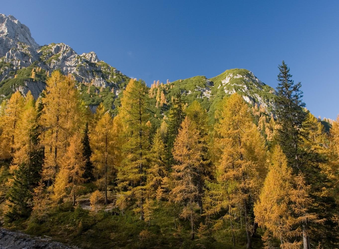 Herbstliche Lerchen in den Lienzer Dolomiten