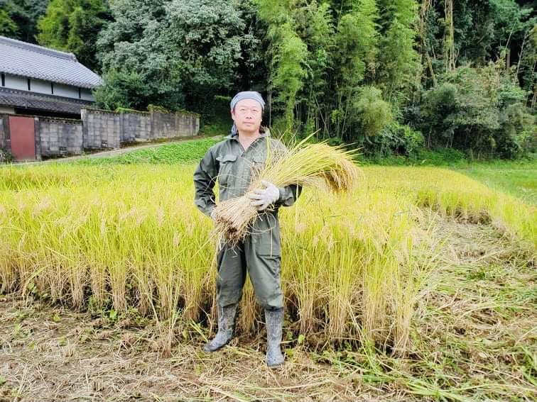 今年の稲刈り開始!