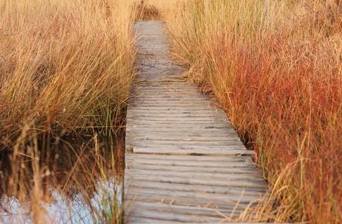 Stege über Moorwasser