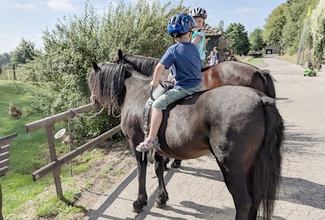 reiten auf Pferden