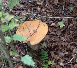 Pilze entdecken