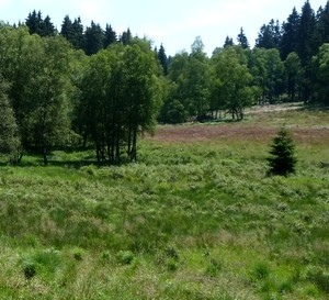 Wiesen Wald Natur