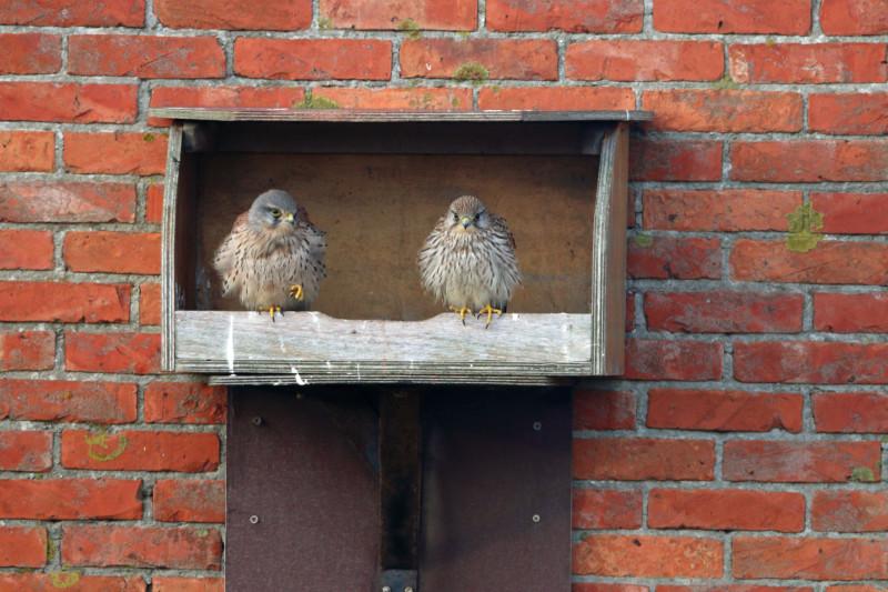 Gebäudebrüter und ihre Niststätten sind geschützt (Foto: Frank Derer, LBV-Archiv)