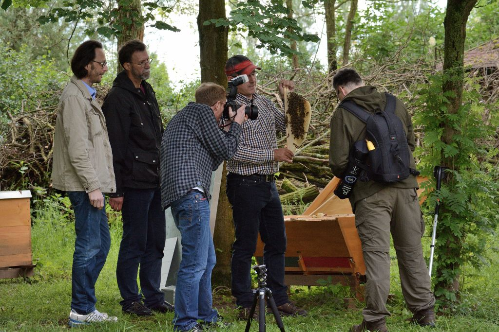 Die Teilnehmer lernen über das gut organisierte Leben der Bienen
