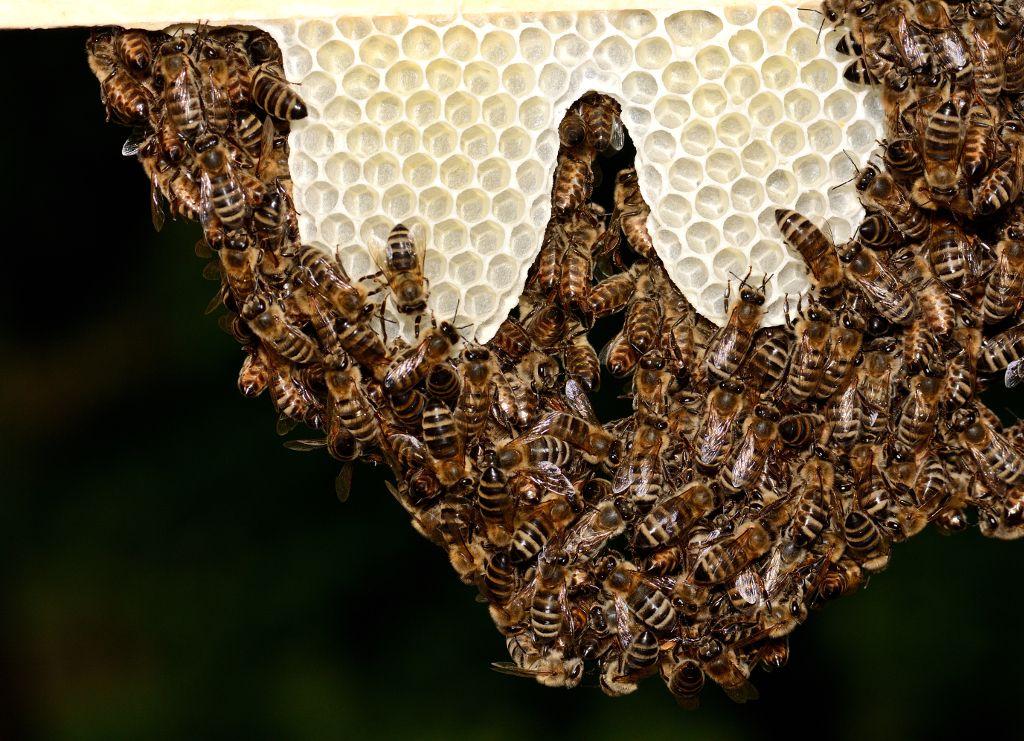 Solch kunstvolle Bienen-Bilder entstanden beim Workshop