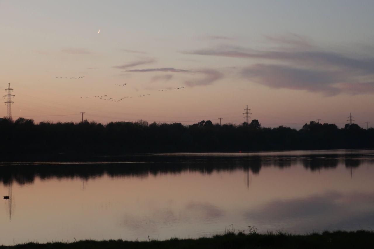 Graugänse am Abendhimmel