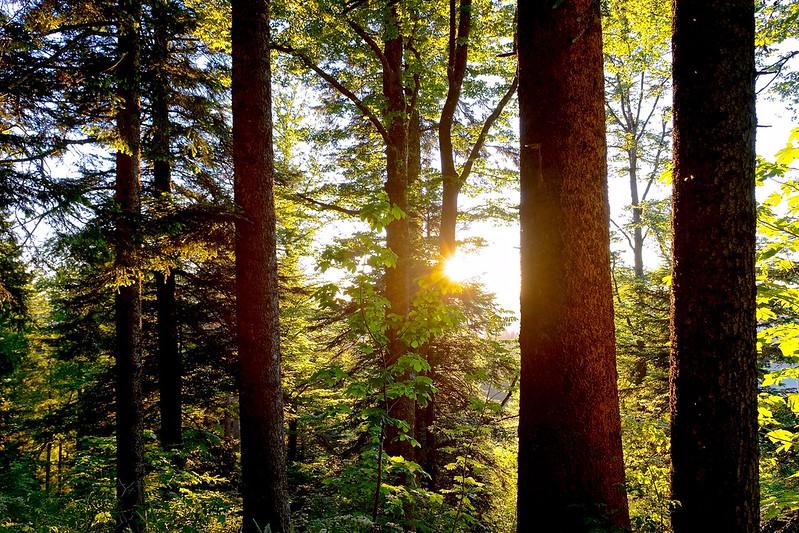 Der Wald entlang der B469 soll erhalten bleiben (Foto: Werner R. via Flickr)