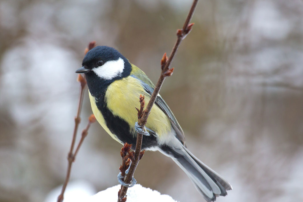 Stunde der Wintervögel - machen Sie mit!