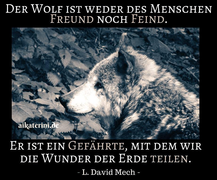 Sprüche über Wölfe