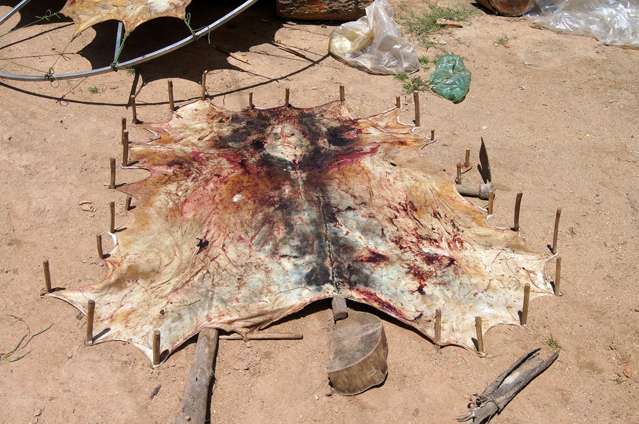 Séchage de la peau au sol. Phnom Penh. Juillet 2012.