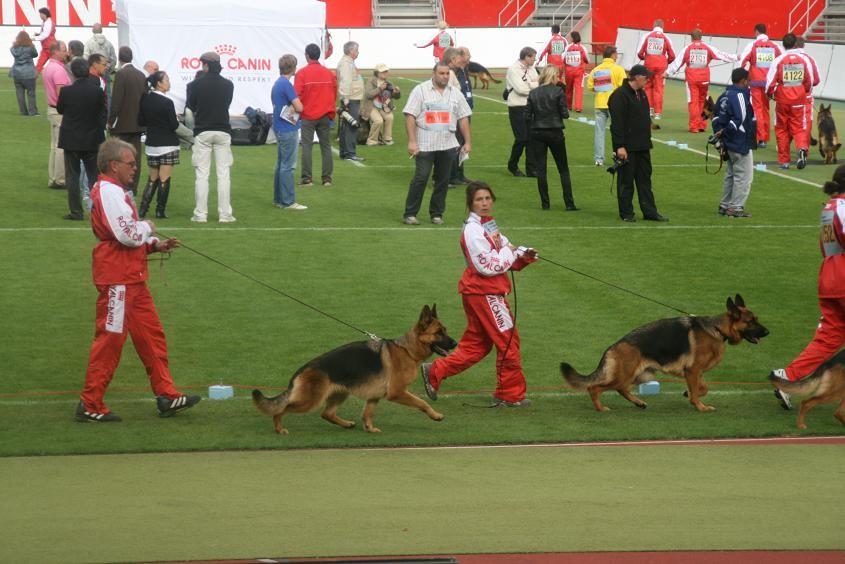 Bundessiegerzuchtschau 2012,Harald und Okka