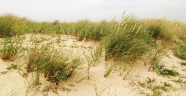 Bordeaux Ocean L'oyat et les dunes de Gironde - Emmanuelle Mazik-Lauritzen intervenante en Energétique et Réflexologie Plantaire - Bordeaux Place Simiot